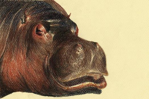 Color Pencil - Cross Hatching - Hippo poo tamos.