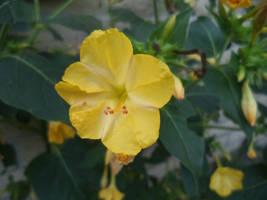Hello Little Yellow by HurricaneCatrina