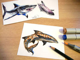 Sharks Leop Lst