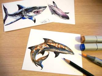 Sharks Leop Lst by Kokkinakis-Achilleas