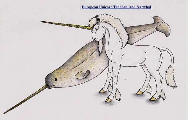 Narwhal Unicorn Myth