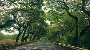 Amazing trees on the side of the road
