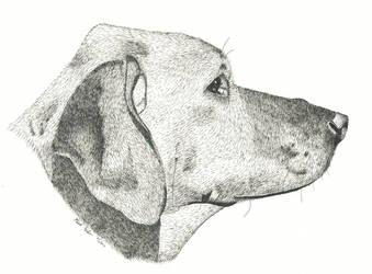 Rook in Profile by mrwatson