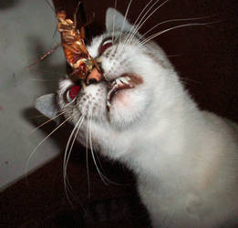 Kitty having a snack. by Esepibe