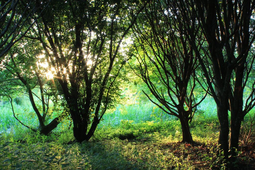 Faeriewoods by Karearea