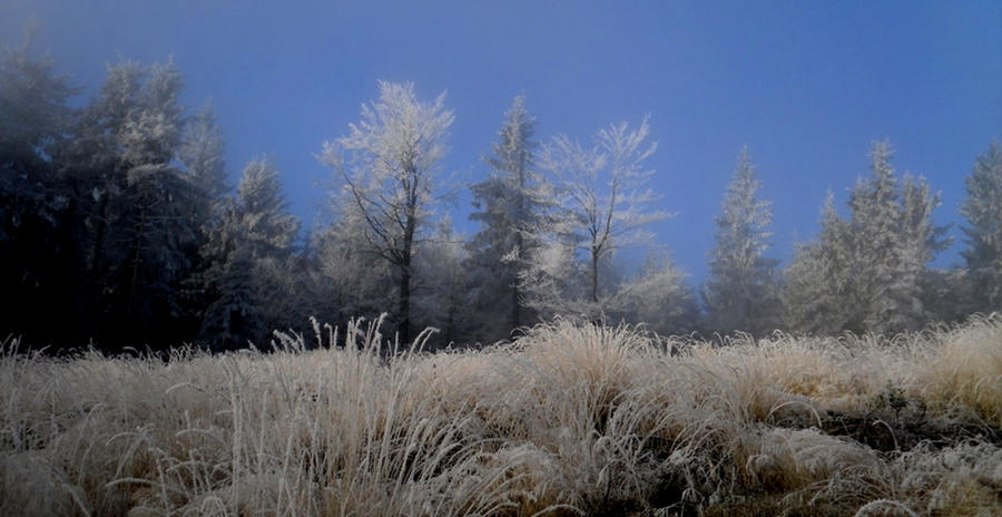 white frost by Jack6677