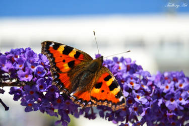 Butterfly by TudborgArt