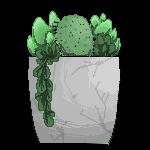 F2U Succulents