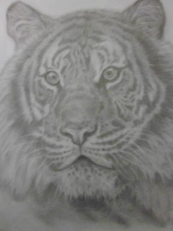 Tiger by TobyJo
