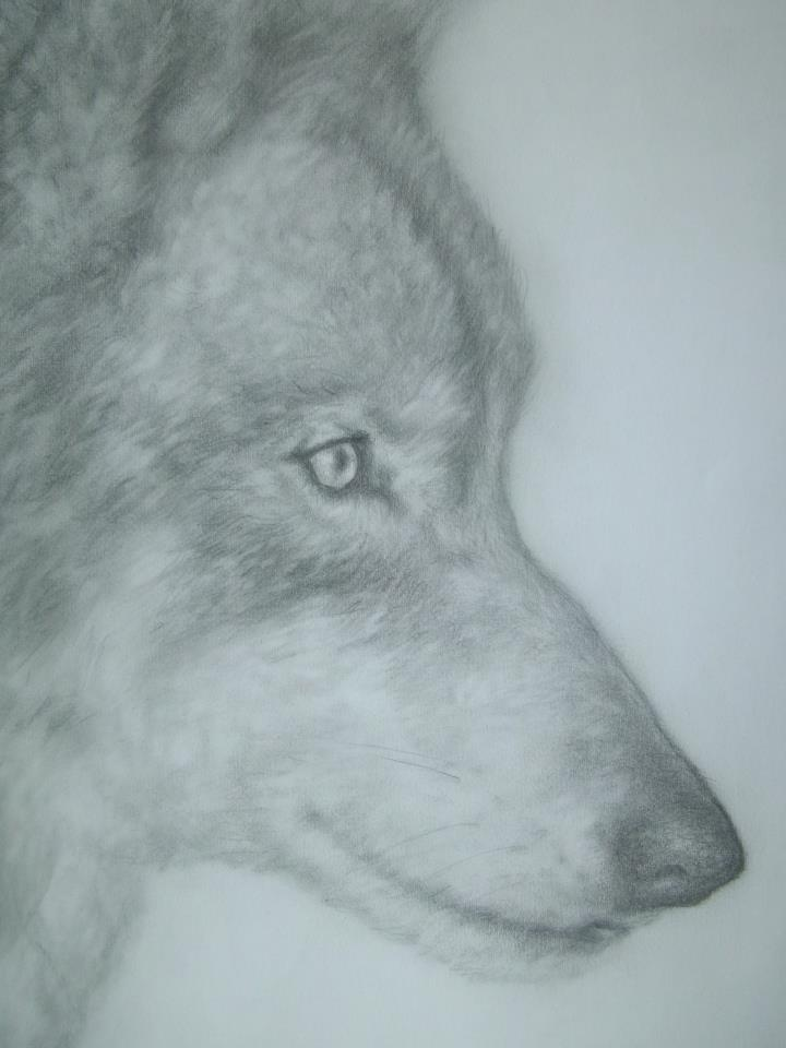 Wolf 1 by TobyJo