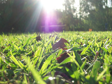 Greener grass.