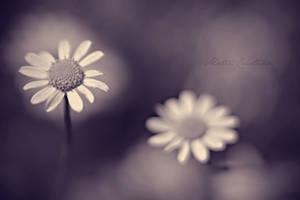 Bloom in my heart by bittersweetvenom