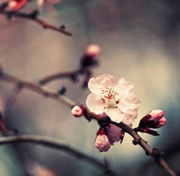 90. :Les fleurs de reve: by bittersweetvenom