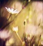 138. :Nature's corner: by bittersweetvenom