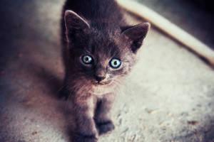 322. :Kitten Smitten:
