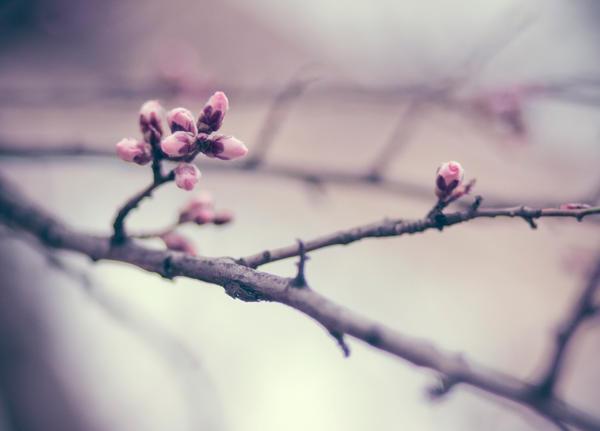Spring's around the corner by bittersweetvenom