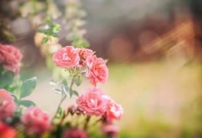 Garden of roses by bittersweetvenom