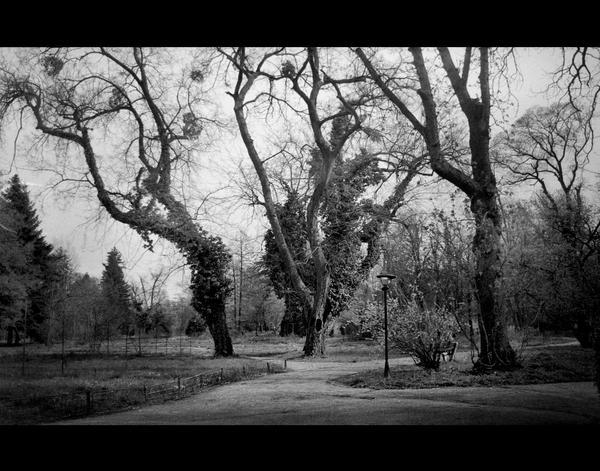 |27| The soulful trees by bittersweetvenom