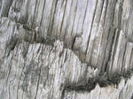 Texture - Wood 25