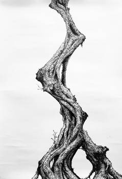 Cortree