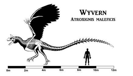 Wyvern Skeleton