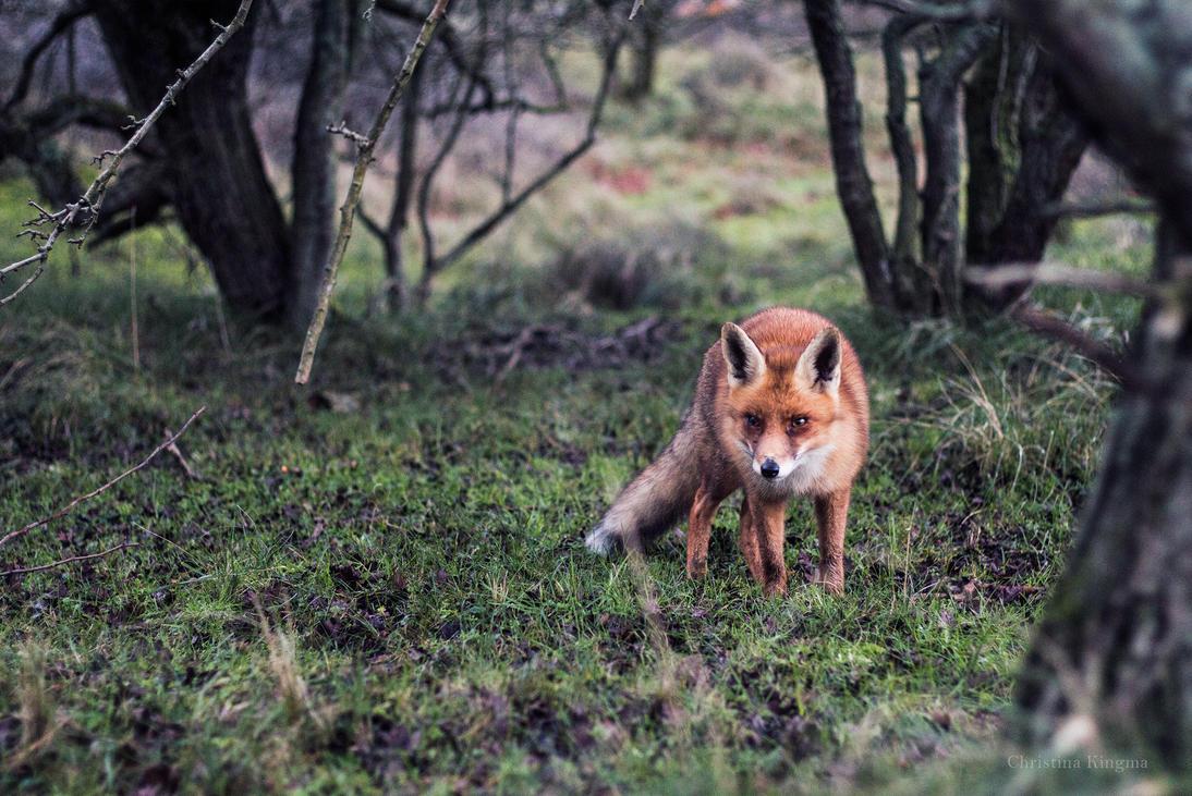 Foxfriend by ChristinaKingma