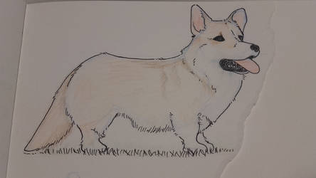 Corgi doodle by GleekingGeek