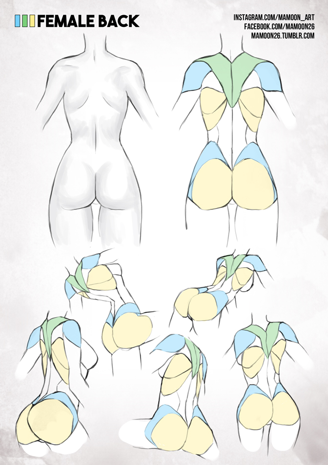 simplified anatomy 07 - female back by mamoonart on DeviantArt
