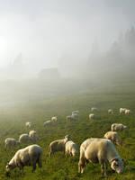 Sheep pasturing 1... by kamzik