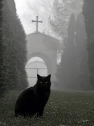 Lodz - Old Cementary by kamzik