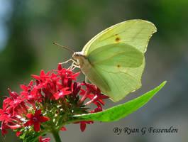 White Yellow Red by Fezzgator