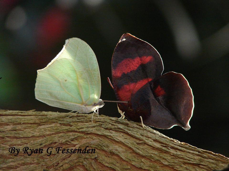 Living Leaf, Dead Leaf by Fezzgator