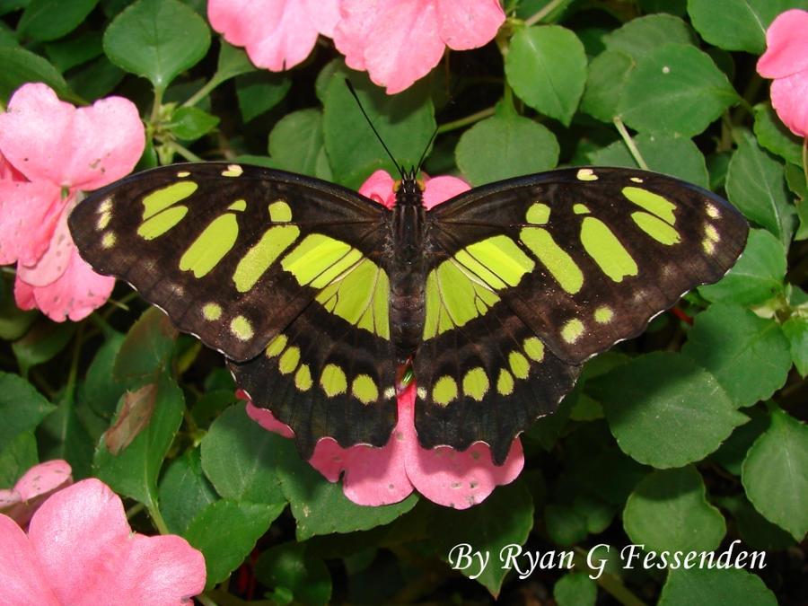 Florida Green by Fezzgator