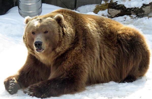 Lol Bear want a Bear hug ,anyon...