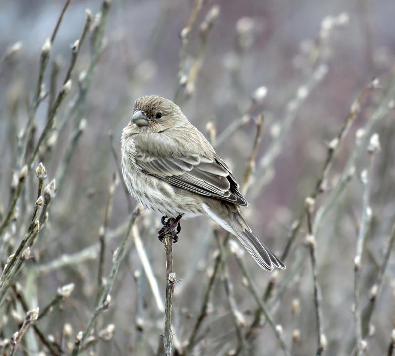 A bird in the Bush by Nipntuck3