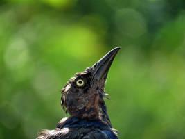 HEADS up ....hehhehe by Nipntuck3