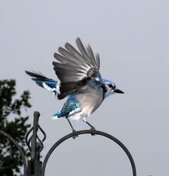 My Daugther's favorite bird