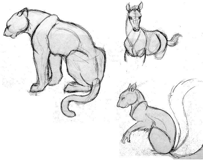 Animal Sketches By Nomm On DeviantArt