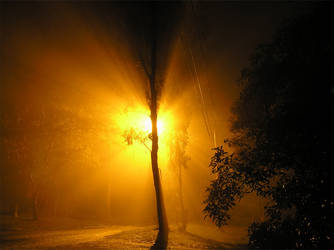 Fog Light by timbo