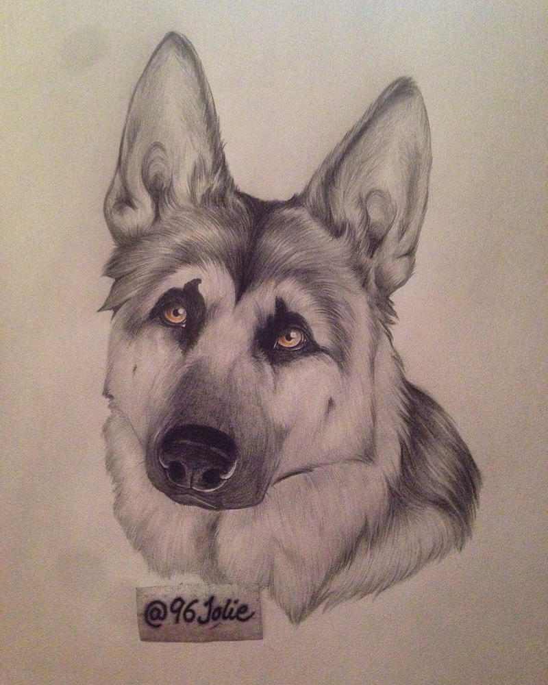 German Shepherd by swiftywolf