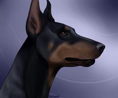 Doberman Pinscher by swiftywolf