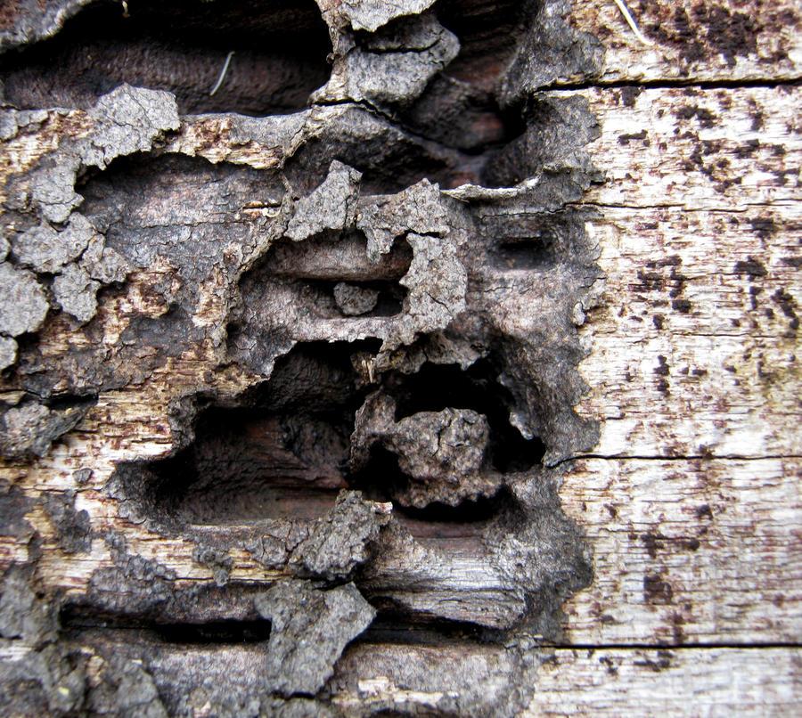 White Ant Eaten Wood Texture by RavenMaddArtwork