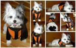 Pup Cosplay Fun - Naruto