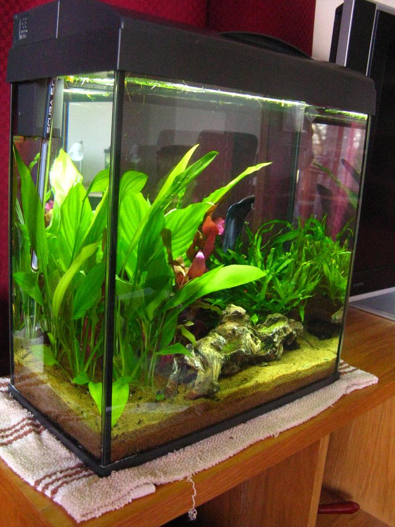 Betta tank by tessaanka on deviantart for Bubbles in betta fish tank