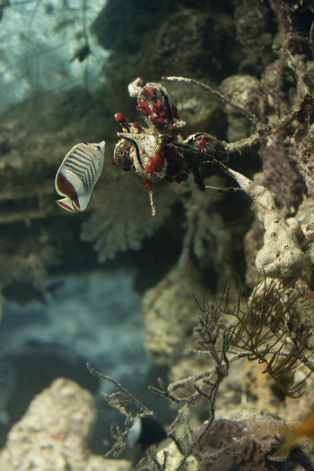 Deep Red Sea by Aqutiv