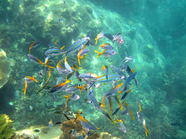 Color explosion under water by ernungo