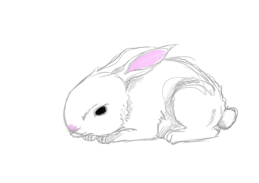rabbit sketch by CamillaAnne