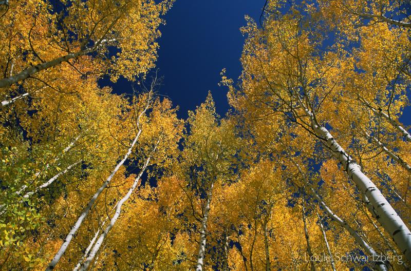 Autumn Splendor by louieschwartzberg