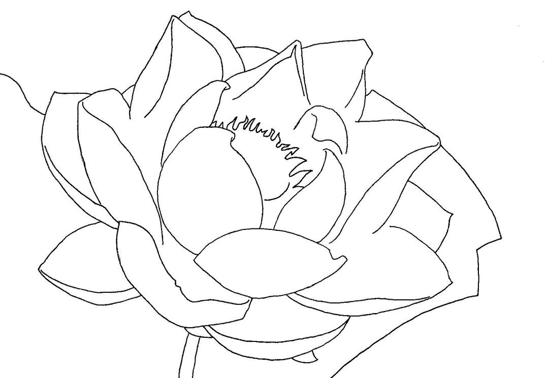 Line Drawing Water : Water lily line art by allanime on deviantart