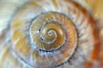 shell by omoniko